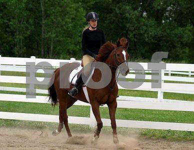 horse 8842