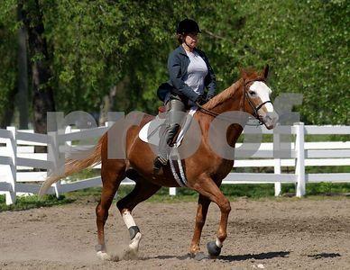 horse 7049