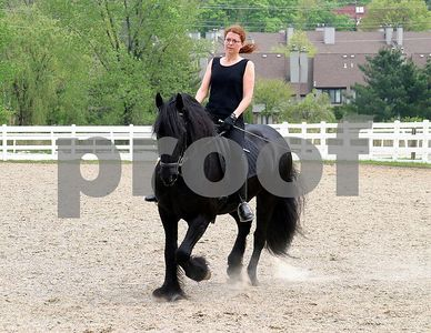horse 6393