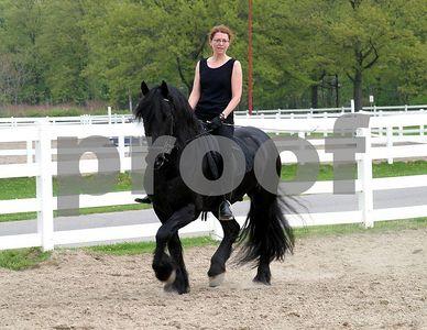 horse 6376