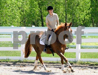 horse 7761