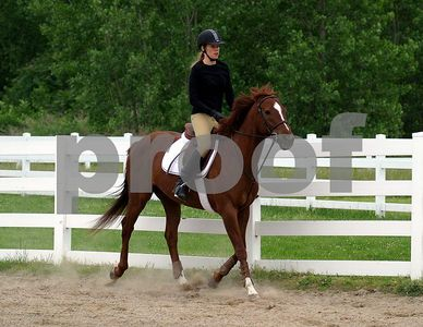 horse 8841
