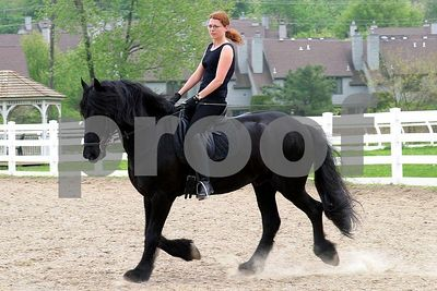 horse 6380