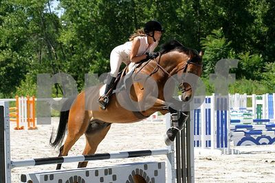 horse 0256