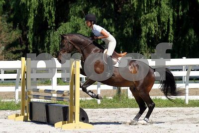 horse 0276
