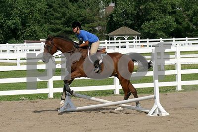 horse 0381