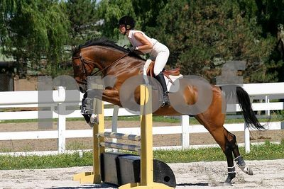 horse 0278