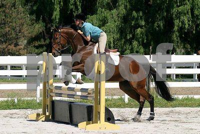 horse 0273