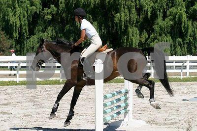 horse 0312