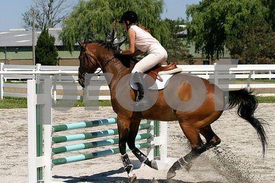 horse 0286