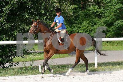 horse 0366