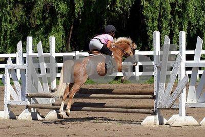 horse 0210