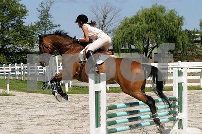 horse 0287