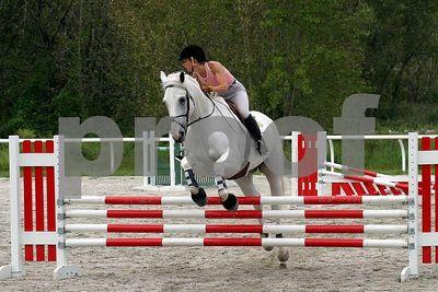 horse2484
