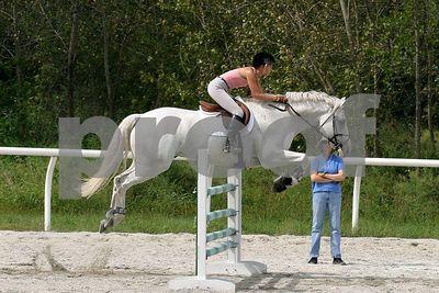 horse2537
