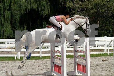 horse2496