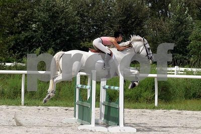 horse2540