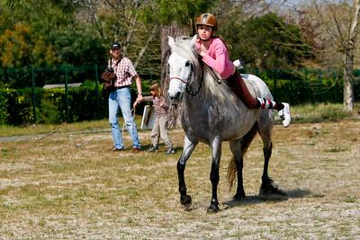 horse 2480