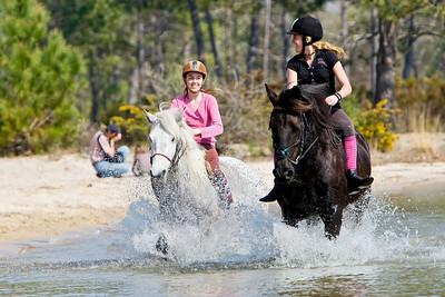 horse 2414