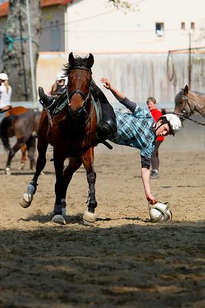 horse 2317
