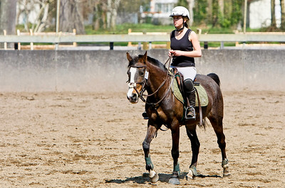 horse 2191