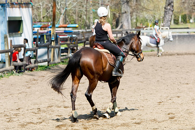 horse 2136