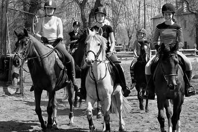 horse 2010-4