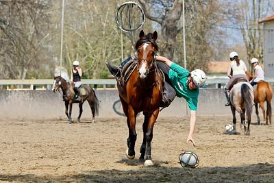 horse 2356