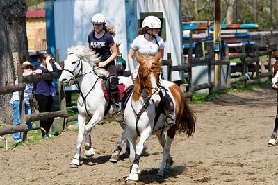 horse 2155