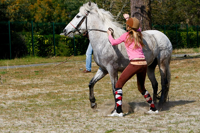 horse 2481