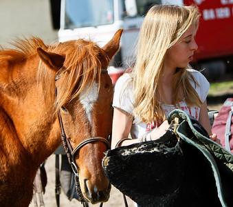horse 2395