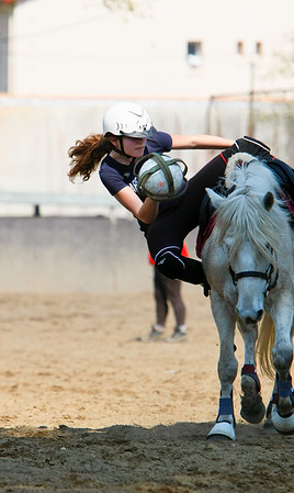 horse 2327