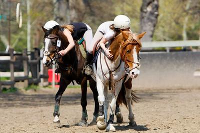 horse 2368