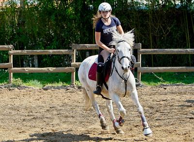horse 2174