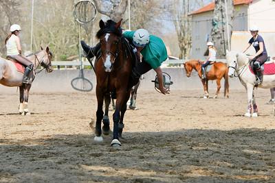 horse 2337