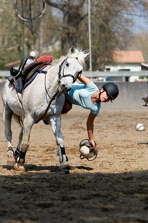horse 2313