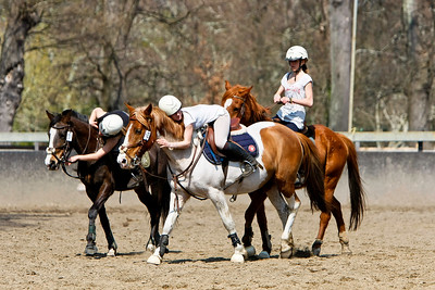 horse 2366