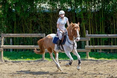horse 2159