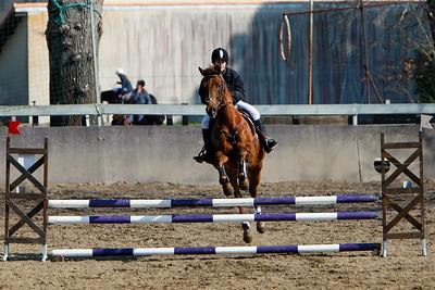 jumping horse 4523