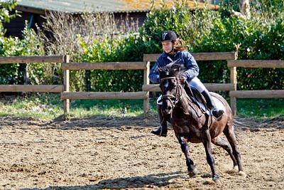 jumping horse 4592