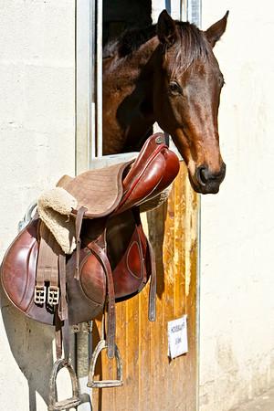 jumping horse 4651