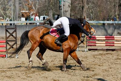 jumping horse 5049
