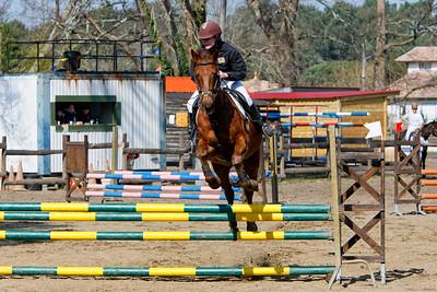 jumping horse 5088