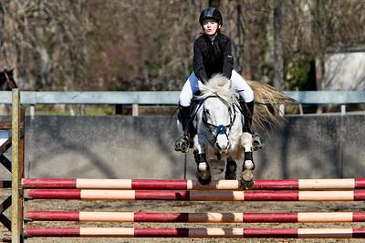 jumping horse 5337