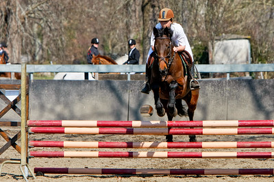 jumping horse 5122