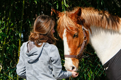 jumping horse 4677