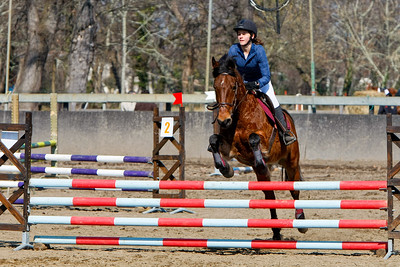 jumping horse 5128