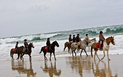 horse beach 5926