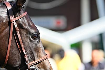 horse 8133-C