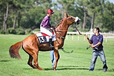 horse 8154-CdeB